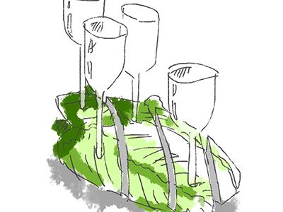 硝子の白菜